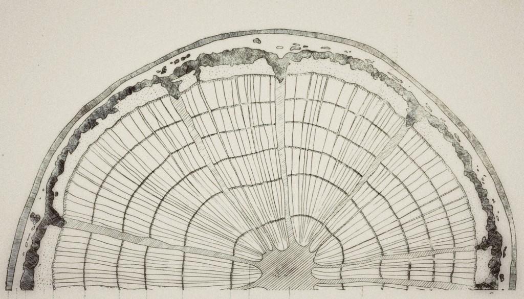 vintage diagram of tree rings